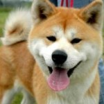 Ciri Khusus Anjing