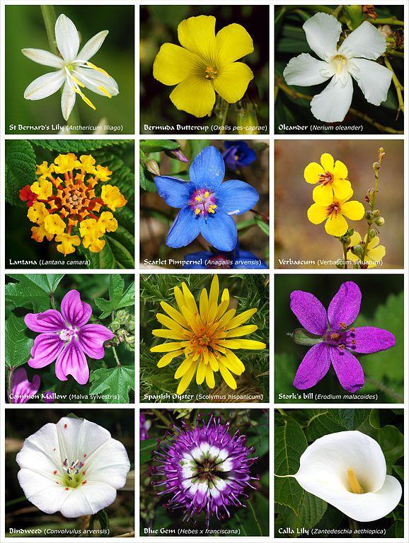 Nama Bunga dalam bahasa inggris