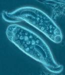 Ciri Ciri Protozoa