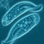 Peranan Protozoa
