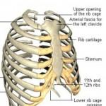 Bentuk Bentuk Tulang Rangka