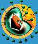 Macam macam infeksi virus