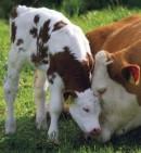 Nama Nama Virus yang merugikan Hewan