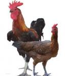 Perkembangbiakan Generatif Pada Hewan