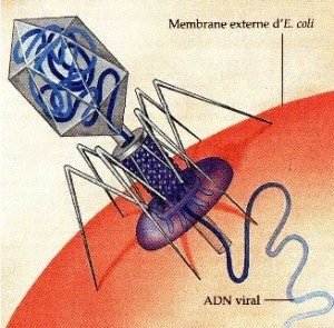 Gambar Infeksi Virus ADN
