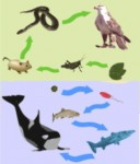 Macam Macam Ekosistem