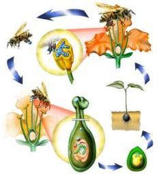 gambar proses penyerbukan pada bunga dengan bantuan serangga
