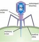 gambar nukleokapsid