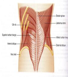 laporan pendahuluan hernia