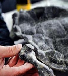 macam-macam fosil