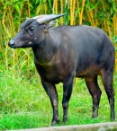 pengertian hewan endemik