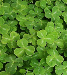 peranan euglena viridis