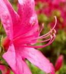 fungsi stigma pada bunga