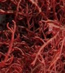 manfaat gracilaria sargassum foraminifera