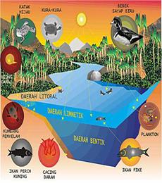perkembangan ekosistem