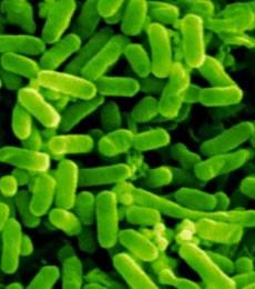 Gambar Mikroba Patogen